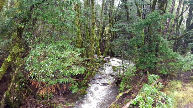 creek-on-way-in