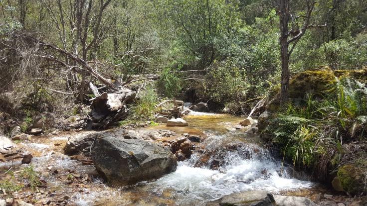 creek-along-lookout-walk