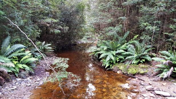 Chuckling Creek 1