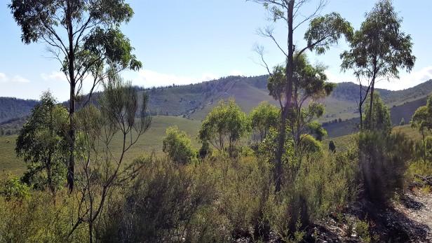 Millicent Valley